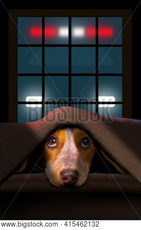 A Cute Little Beagle Dog Cowers Under A Blanket As A Police Car Is Seen Outside A Window In This 3-d