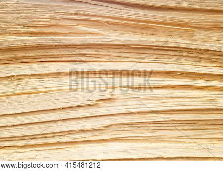 Background Of A Freshly Cut Pine Trunk Close-up. Pine Trunk Texture