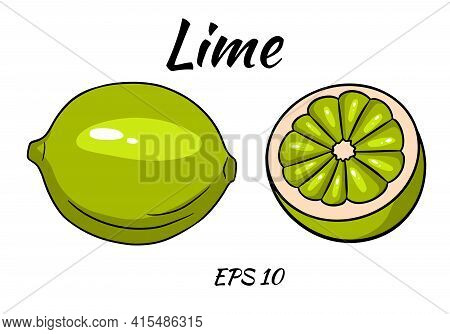 Set Of Juicy Limes. Lime, Whole And Half Cut. Illustrations For Design And Decoration.