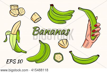 Vector Set Of Bananas. Banana In Hand, Banana Wedges, Bananas In A Bunch. Green Bananas.