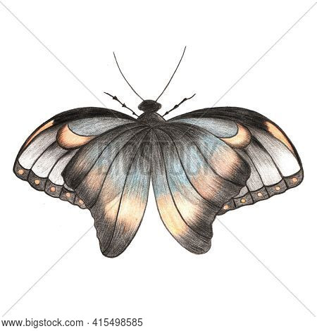 Design Element Hand Drawn Illustration Of Colorful Butterfly With Ornamental Wings In Gray, Blue And