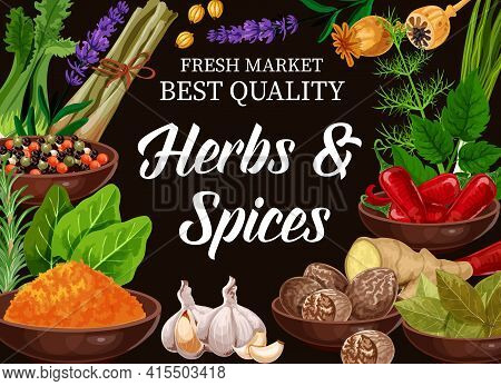 And Herbs, Seasoning Condiments And Flavorings For Food Cooking, Vector. Organic Herbs, And Herbal S