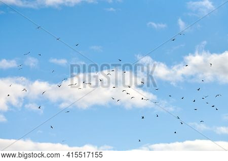 Seagulls Flying High In Blue Sky With White Fluffy Clouds. Silhouettes Of Hovering White Birds On Na