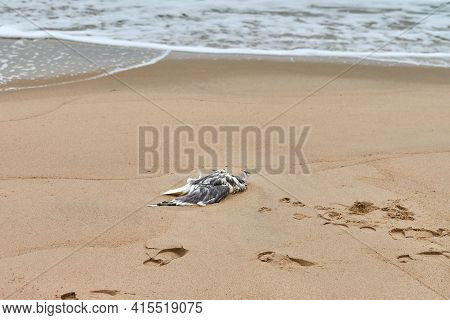 Dead Seabird On Polluted Sandy Beach. Outstretched Dead Body Of Bird On Coast. Marine Birds Eating F