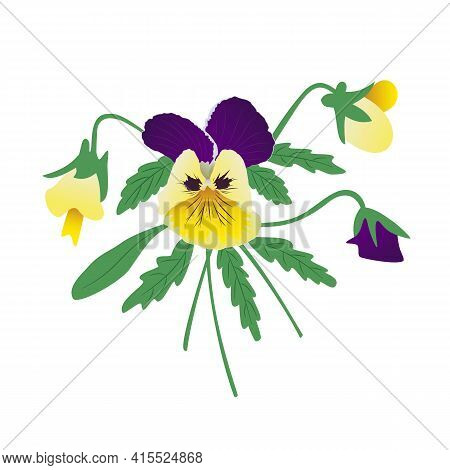Bouquet Of Pansies, Yellow And Purple Petals. A Flower Arrangement Of A Bright Bud Of Flowers And Gr