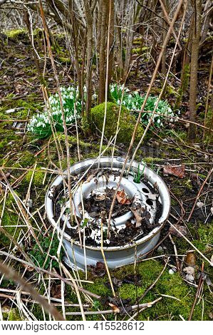 Old Rim To Car In Forest Near Wood Anemone