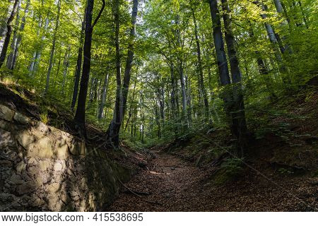 Paths Of City Park Of Jan Iii Sobieski Full Of Old Trees In Walbrzych