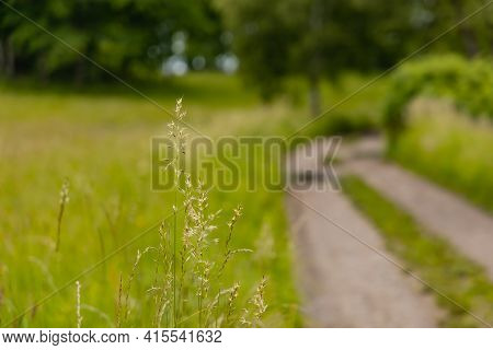 Tiny Bush Next To Long Path With Bushes And Fields Around In Kaczawskie Mountains