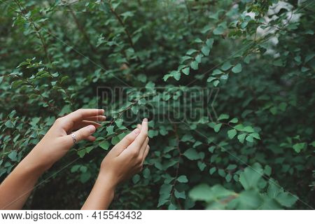 Women Hand Finger Picking Up Tea Leaves At A Tea Plantation For Product , Natural Selected , Fresh T