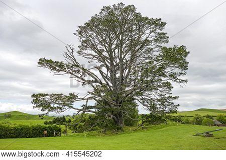 Matamata, Waikato, New Zealand - September 09. 2019: Idyllic Scenery Including A Big Tree At The Shi