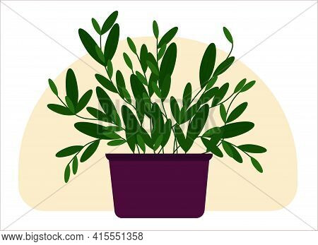 Vector Drawing Of A Home Potted Plant. Tall Plant With Trunks And Large Green Leaves.