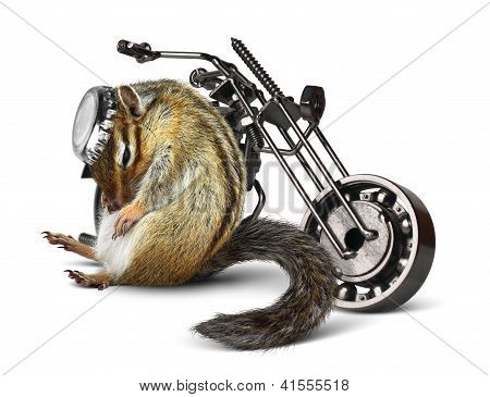 Funny chipmunk biker with motorcycle on white poster