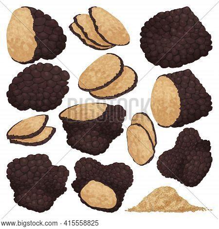 Truffle Vector Illustration On White Background. Isolated Cartoon Set Icon Mushroom. Vector Cartoon