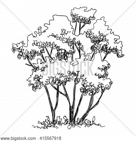 Thin Tree Icon. Hand Drawn And Outline Illustration Of Thin Tree Vector Icon For Web Design