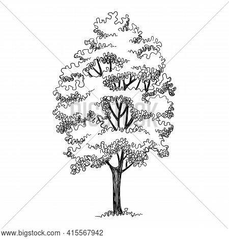 High Tree Icon. Hand Drawn And Outline Illustration Of High Tree Vector Icon For Web Design