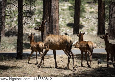 Forest Animals Wildlife. Deer Fawn, Bambi, Capreolus. White-tailed Young Roe Deer