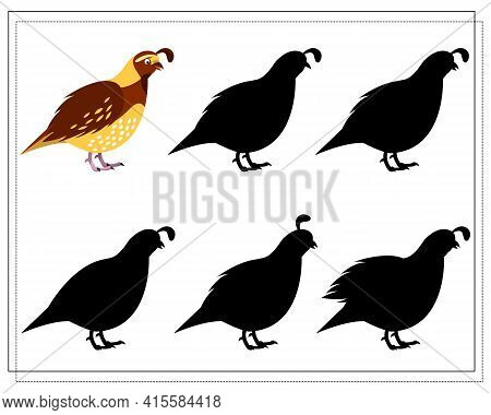 A Puzzle Game For Preschool Children. Find The Right Shadow. Cartoon Bird, Quail. Silhouette. Vector