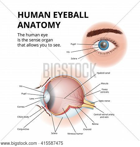 Anatomy Of The Human Eyeball, Schematic Medical Diagram