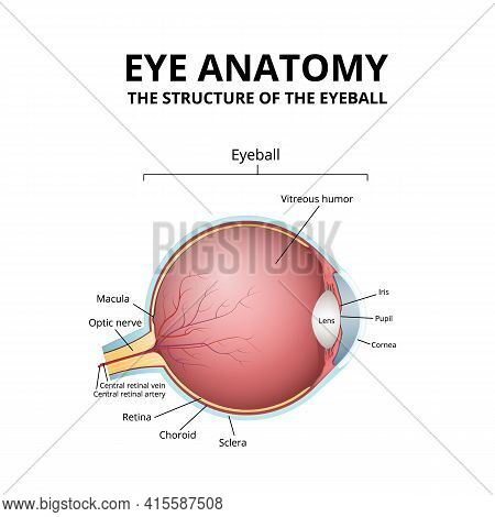Human Eye Structure, Scheme Medical Diagram Eyeball