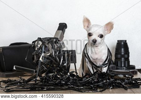 A White Chihuahua Dog Sits Entangled In A Black Thin Film And An Old Film Video Camera Stands Next T