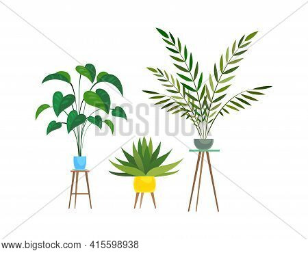 Indoor Plants. Tropical Ficus Or Palm In Pot On Wooden Stands, Houseplant Decorative Collection, Col