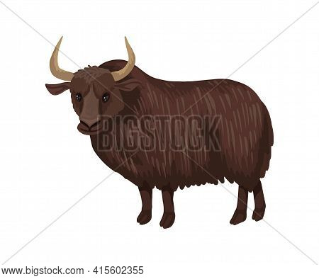 Yak, A Large Hairy Dark Brown Bull, Is A Steppe Herbivore. Wild Evil Yak. Vector Isolated Character