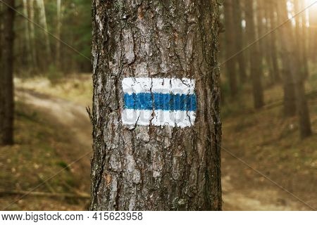Walking Trail Background. Blue Forest Path. Brown Tree Trunk. Guide Sign Made With Paint. Symbol Poi