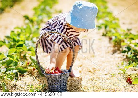 Closeup Of Little Toddler Girl Picking And Eating Healthy Strawberries On Organic Berry Farm In Summ