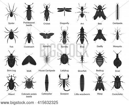 Beetle Isolated Black Set Icon. Vector Black Set Icon Insect . Vector Illustration Beetle On White B