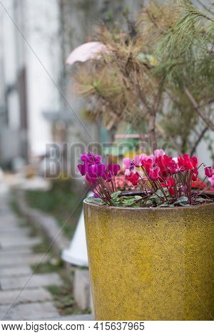 Stony Narrow Alleyway With Flower Plants In Pots.