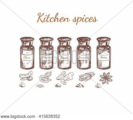 Hand Drawn Kitchen Spices Set With Glass Bottles Of Clove Cardamom Ginger Cinnamon Anise Isolated Ve