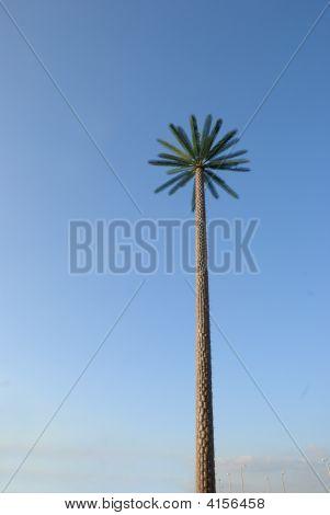 Long Date Tree