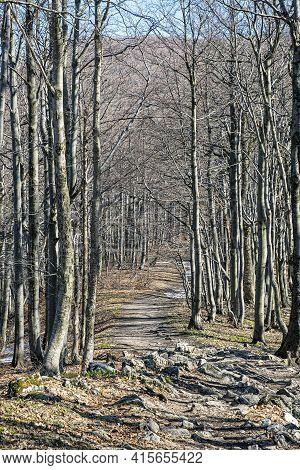 Tourist Path And Deciduous Tree Alley, Klak Hill, Slovak Republic. Seasonal Natural Scene.