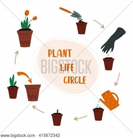 Plant Life Circle. Care For Indoor Plants.  How To Grow A Plant.