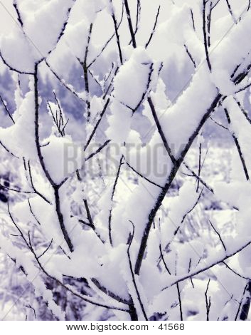 Snow On My Branches