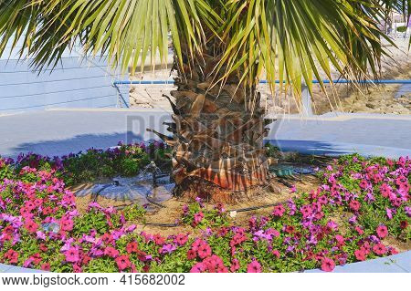 The Process Of Watering, Moisturizing, Sprinkling Palm Trees In Hot Middle Eastern Countries With Ar