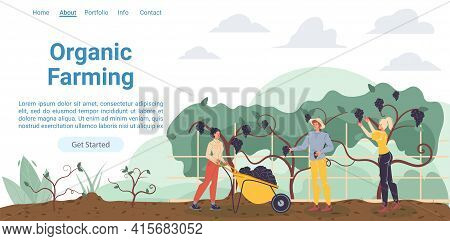 Vector Cartoon Flat Farmer Characters Harvesting, People Workers Harvest Grapes Fruits-natural, Orga