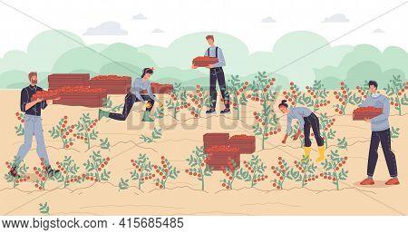 Vector Cartoon Flat Farmer Characters Harvesting, People Workers Harvest Tomatoes Vegetables-ecologi