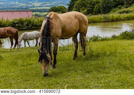 Big Horse On Horse Farm Next To Small Pond