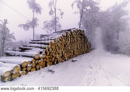 Felled Tree Trunks By A Forest Road In Winter