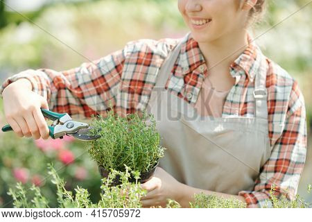Young smiling female gardener in workwear using pliers while shortening green plants or seedlings against large flowerbeds in greenhouse