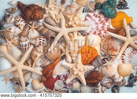 A Pile Of Different Shells And Starfish Mixed On A Light Background. Background With Shells, Top Vie