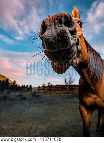 Wide angle lens of a horse snout super close up