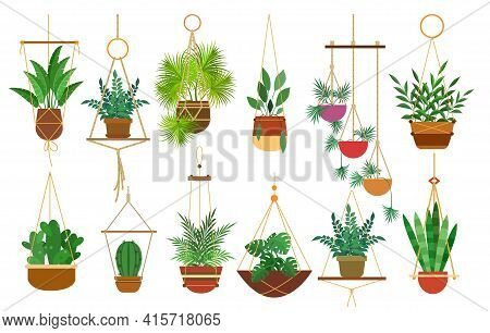 Hanging Pots Plants. Hang Botanical Decoration Houseplants Isolated On White Background, Cozy Home G