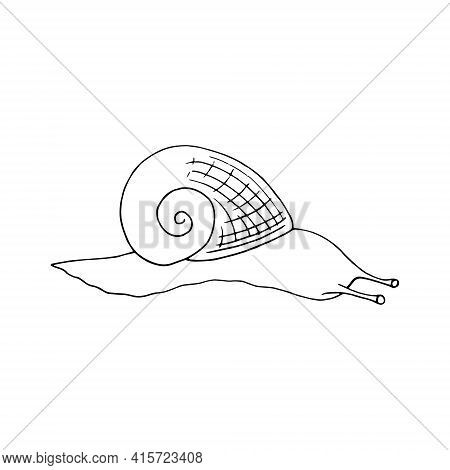 Snail Icon. Hand Drawn Doodle Style. Vector, Minimalism, Monochrome, Sketch Clam Shell Slow