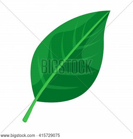 Leaf Pear Vector Icon.cartoon Vector Icon Isolated On White Background Leaf Pear.