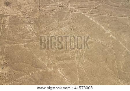Nazca Lines, Aerial View, Peru, The Condor poster
