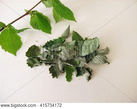 Dried Hazelnut Leaves For Hazelnut Leaf Tea On A Wooden Board