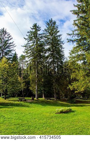 Green grassy lawns at the edge of a picturesque autumn forest. Beautiful sunny autumn day. Charming pastoral. Picturesque Julian Alps. Slovenia.