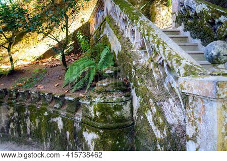Wet Mossy Stone Closeup Photo. Wet Tropical Climate Stone Wall With Green Plants. Mosson Stonewall.